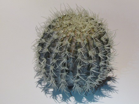 Cactus Cache Kit